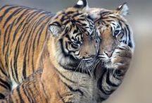 wild couples:)