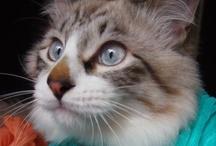 My Cats: London&Louboutin