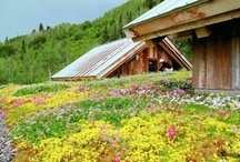 green roofs | tetti verdi