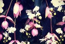 AW13 // Dark Blossoms
