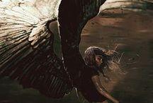 story board   shadow bird