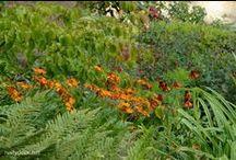 Prairie Gardening