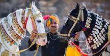HORSE typ akhal tekke, marwari, saddlebred