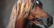 HORSE typ asil
