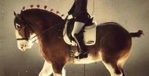 HORSE typ cool blooded