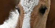 HORSE curly