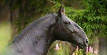HORSE Ramskopf