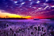 """Passionate Purple / """"I think it pisses God off if you walk by the color purple in a field somewhere and don't notice it.""""  ― Alice Walker, The Color Purple / by Linda S"""
