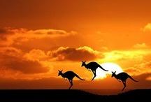 Sunset / Sunrise - Animal