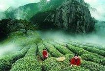 Organic Loose Leaf Teas / At Green Leaf and Pebble Tea Spa, we love Certified Organic, Loose Leaf Teas!