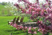 Brenton Arboretum Images