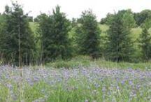 Wildflowers at the Brenton Arboretum / Flowers