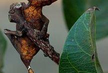 Kaartjes Beestjes