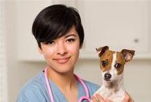 Emergency Vet Hillsborough NC / Best choice for emergency vet in Hillsborough NC. North Churton Animal Hospital 636 N Churton St Hillsborough, NC 27278 Call (919) 644-7387. - myhometownvet.com/north-churton-animal-hospital