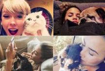 Celebrity Pets / From pampered pooches to coddled cats - the animals of the rich and famous!