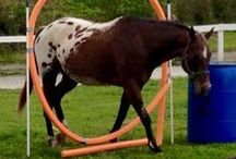 Training Ideas / These are all ideas for fun shows/desanaitizing a horse.