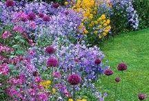 Garden - Scapes