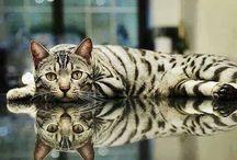 animals / by Tammy Whaley