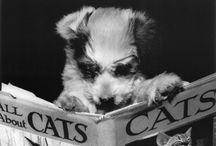 |I Luv Ya Puppy|