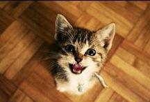 Cat's groove