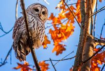Wild birds...create a habitat,