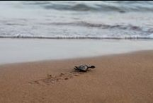 Sea Turtle Hatchlings / Here are all our photos of loggerhead sea turtle hatchlings