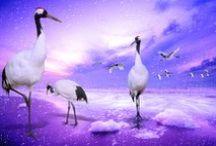 Birds / Birds - Nature