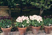. garden things
