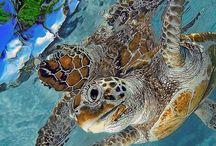 Tortuga - Schildkröte / Die Tortuga - alte Weisheit. Das Geheimnis der Schildkröten, the sea turtles.