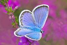 Πεταλουδες...♥‼