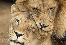 Beautiful Creatures :-) ....
