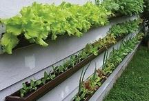 I Want to Start a Garden