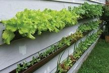 Gardening / Vegetable gardening; fruit gardening; flower gardening; outdoor living; flowers I would like to grow someday; wildflower identification.