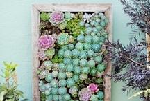 Green Thumb / All things gardening