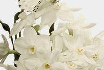 Colours - White