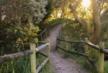 Paths/Boardwalks/Trails / Just because I don't know if anything makes me feel much happier!  In a calm kind of way :)