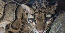 tygrysy i inne koty