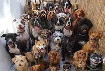 photos chiens / trop cute les chiens