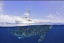 i like whales