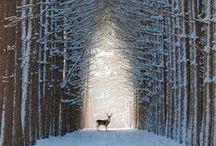 Winter Wonders.