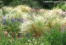 Gardening / One of the best gardening blogs around, from Austin, Texas.  / by Suzanne Holden