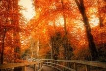 I love fall ....