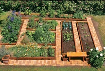 Gardening Tips / Flowers, vegetables, and landscaping ideas for the brown-thumbed gardener. / by Chris Moninger