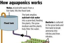 Prepper Aquaponics Hydroponics
