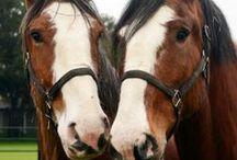Equine / The animals we love.