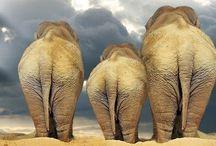 Animal photography / Mooie foto's van mooie dieren