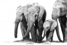 African Wildlife Art / My graphite art