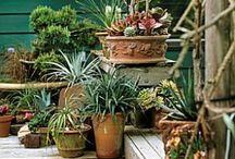 Tuin ideeën  / Styling ideeën voor buiten en tips voor tuinieren.
