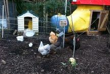Unusual chicken coop designs / Chicken coop designs and conversions which are a little bit unusual.