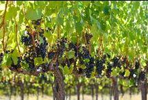 Viner enligt Georg Borgström / Veckans viner av Hufvudstadsbladets expert.